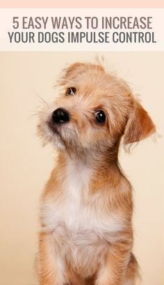5 Simple Ways to Increase Your Dogs Impulse Control via @KaufmannsPuppy