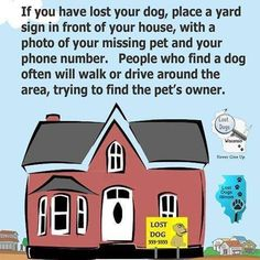 If you have lost your dog, place a yard sign in front of your house, with a photo of your missing pet and your phone number. People who find a dog will often walk or drive around the area trying to find the pet's owner.