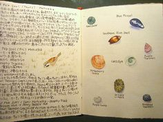 Travel journal: What a cute idea to draw the different types of sea shells! :)