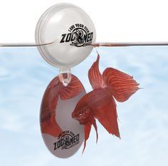 Top 10 betta fish toys 4 a floating log fish for Betta fish mirror