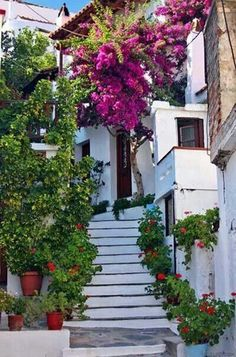 Bougainvillea at stairs in Skopelos Town , Greece Albania, Skopelos Greece, Skiathos, Santorini Greece, Mykonos, Places To Travel, Places To See, Beautiful World, Beautiful Places