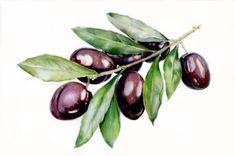 Я обожаю оливки- всякие и - баночные и дорогие- на развес.. оливковое масло- это подарок богов... может быть моя прежняя жизнь протекала в Греции? Среди оливковых рощ, морских волн ... в тунике и сандалиях... под Сиртаки....#оливки#ботаническаяживопись #иллюстрация#акварель #рисуйкаждыйдень #рисуйсветом#aquarelle #watercolor #ilustration #botanical #olive #greece#painting #pinax #paperflowers #green Flower Art Drawing, Plant Drawing, Food Drawing, Watercolor Flowers, Watercolor Paintings, Watercolour, Vegetable Painting, Art Basics, Cute Fruit