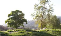 Weddings in Carmel |Carmel Valley Ranch - Gallery | Carmel Valley Weddings