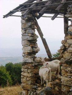 Kosovo What A Wonderful World, Beautiful World, Albanian Culture, Republic Of Macedonia, 11th Century, Bosnia And Herzegovina, Montenegro, Farm Animals, Wonders Of The World