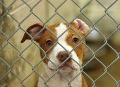 Top 12 Banned Dog Breeds ~ via www.msn.com/en-us/lifestyle/pets/top-12-banned-dog-breeds/ss-AAbAQTC#image=1