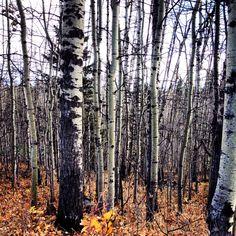 Autumn in Alberta, Canada. #WesternUnion