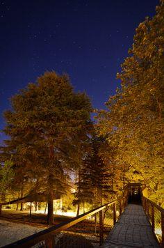RICARDO-OLIVEIRA-ALVES-TREE-SNAKE-HOUSES_2155
