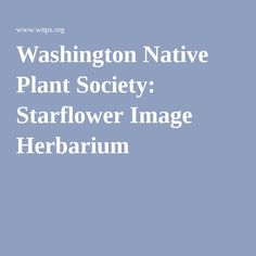 Washington Native Plant Society: Starflower Image Herbarium