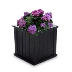 Mayne Self-Watering Cape Cod 20 in. Square Black Plastic - The Home Depot
