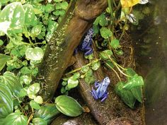 How to build a dart frog terrarium by Reptile Magazine