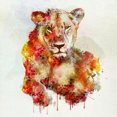 Resting Lioness Watercolor Painting Mini Art Print by marianvoicu Watercolor Lion, Watercolor Paintings, Lion Painting, Watercolor Animals, Watercolors, Lioness Tattoo, Lion And Lioness, Wildlife Decor, Beautiful Artwork
