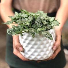 Small Potted Plants, Large Plants, Cool Plants, Green Plants, Indoor Plants, House Plants Decor, Plant Decor, Succulent Favors, Garden Entrance
