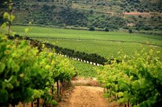 valle dell'acate vineyard - sicily