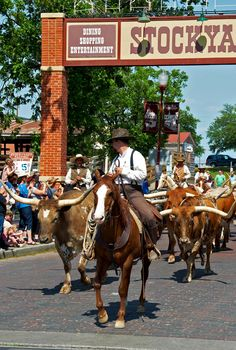 Stockyards. Fort Worth, Texas. Twice Daily #FortWorth Herd Cattle Drive in the Historic Stockyards: 11:30pm and 4pm.