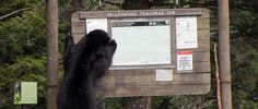 Day Hiking Guides - Yellowstone National Park (U.S. National Park ... Hellroaring trail!