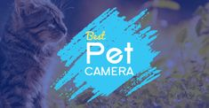 8 Best Pet Cameras on the Market This 2018 - iPetCompanion Perfect Image, Perfect Photo, Love Photos, Cool Pictures, Pet Camera, Online Fun, Camera Reviews, Video Camera, Pet Supplies