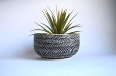 Hey, I found this really awesome Etsy listing at https://www.etsy.com/listing/223239122/h-e-r-r-i-n-g-b-o-n-e-ceramic-planter