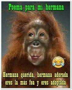 Mi Cuñada Memes Y Mensajes Pinterest Cute Monkey Ape Monkey Y