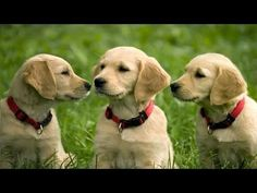 FUNNY DOG VIDEOS PART 5 -  #dog #funnydogs #puppy #doglover #animal #pet #cute #pets #animales #tagsforlikes Stop Your Dog's Behavior Problems! Click HERE to learn how! JOIN TEAM 2M! NEW VIDS MON, WED & FRI @ 5ET!! LIKE, COMMENT & SHARE!!! ******************************************* TWITTER:  FACEBOOK:... - #Dogs