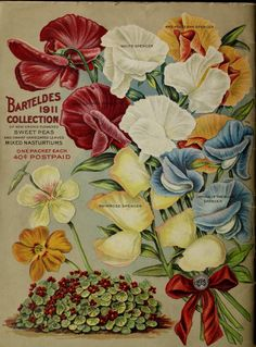 Barteldes, Novelties and specialties for 1911,  back cover