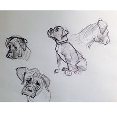 "Glen Keane Productions — Studies for ""Bo"" the boxer in ""Duet"". Animal Sketches, Animal Drawings, Art Sketches, Boxer Dog Tattoo, Dog Tattoos, Shiloh Dog, Dog Outline, Boxer Dog Puppy, Disney Art Of Animation"