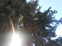 Ruhumun derinliklerine sızıyor güneş...