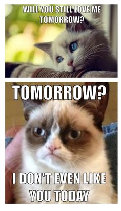 Grumpy Cat Memes That You Will Love! – Fallinpets Grumpy Cat Memes That You Will Love! Grumpy Cat Memes That You Will Love! Grumpy Cat Quotes, Funny Grumpy Cat Memes, Angry Cat Memes, Sad Cat Meme, Cute Cat Memes, Funny Animal Jokes, Funny Animal Pictures, Hilarious Pictures, Funny Pics Of Cats