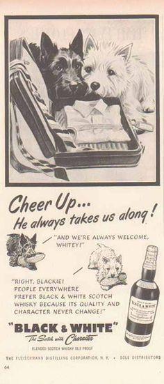 Black & White Scotch Whiskey 1952 Ad Scottish Terriers - Cheer Up!
