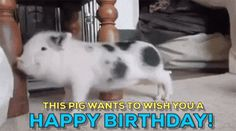 Discover & share this Happy Birthday Weird GIF with everyone you know. GIPHY is how you search, share, discover, and create GIFs. Happy Birthday Meme Gif, Happy Birthday Dancing, Happy Birthday Pictures, Happy 2nd Birthday, Pig Birthday, Birthday Stuff, Hiking Meme, Meme Gifs, Funny Gifs