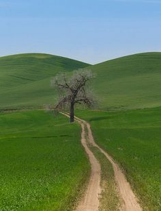 Road and Tree by stevewhis, via Flickr