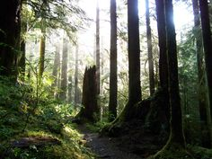 """""""Olympic National Park, Washington State."""" Submitted by Tom B."""
