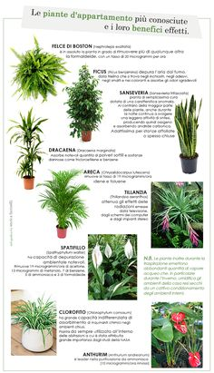 Awe Inspiring Indoor Gardening An Environment Friendly Thing Ideas. Exhilarating Indoor Gardening An Environment Friendly Thing Ideas. Garden Plants, Indoor Plants, Dracaena Marginata, Flores Diy, Plants Are Friends, Green Life, Cool Plants, Ficus, Garden Planning