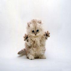 cute-kitty-ipad-background.jpg 1,024×1,024 pixels