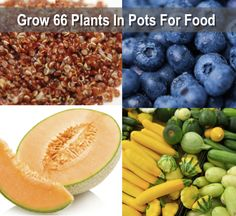 Growing Your Food In Pots: 66 Plants That Grow In Containers...http://homestead-and-survival.com/growing-your-food-in-pots-66-plants-that-grow-in-containers/