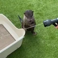 Animal Jokes, Funny Animal Memes, Funny Jokes, Cute Animal Videos, Cute Animal Pictures, Cute Little Animals, Cute Funny Animals, Nature Animals, Animals And Pets