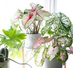 Grande tendance 2018 : les plantes à motifs | DECOCLICO Mini Terrarium, Paper Leaves, Diy Garden Decor, Indoor Plants, House Plants, Flower Arrangements, Bloom, Green, Gardening