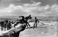A mule train carrying ammunition near Papades on Euboia during the Greek Civil War. (Photo by Bert Hardy/Getty Images). Military Photos, Military History, Military Branches, World War One, History Photos, In Ancient Times, Black And White Pictures, Civilization, Old Photos