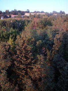 Ancona,Marche, Italy- Cittadella's Trees  in Autumn 2009 - by Gianni Del Bufalo (CC BY-NC-SA 2.0)