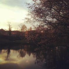Swan Pond, Landau (Germany)