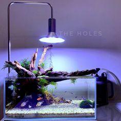 Terrarium Tank, Nano Tank, Freshwater Aquarium, Fresh Water, Aquarium Ideas, Fish Tanks, Aquascaping, Turtles, Projects