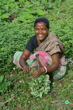 Vegetable Farmer , iNDIA