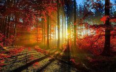 Богатая красками осень.