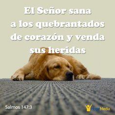 Dios sanó las heridas de los que habían perdido toda esperanza. (Salmos 147:3) http://hopemedia.es