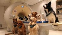 Dogs have the ability to distinguish vocabulary words and the intonation of human speech through brain regions similar to those that humans use, a new study reports. Attila An. Dog Words, Human Voice, Brain Activities, Dog Behavior, Animal Behaviour, Diy Stuffed Animals, Mans Best Friend, Dog Owners, Dog Treats