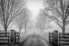 Winter fog Photo by Viet Dao — National Geographic Your Shot