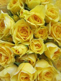 105 best yellow rose of friendship images on pinterest yellow love this flower yellow roses the last birthday present i gave you was a dozen mightylinksfo