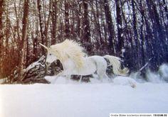 Robert Vavra Das Einhorn lebt – Unicorns I have known Prachtband ...
