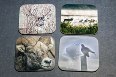 Best selling item - Wooden Scenic and/or Wildlife coasters , set of 4, Bar accessories, Man Cave, wedding gift, drinkware, home accents, gif by PicturesFromHeaven on Etsy