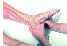 Hand Massage Therapy – Better Health in the Palm of Your Hand Massage Therapy Career, Massage Therapy Rooms, Massage Tips, Massage Techniques, Accupuncture, Mudras, Human Body Anatomy, Reflexology Massage, Relaxing Yoga