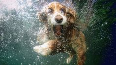 Lucky Puppy's Pool Party Video Is the Most Adorable Thing You'll See All Day - weather.com